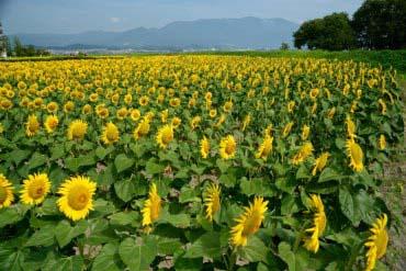 第一NAGISA公园(滋贺、琵琶湖)