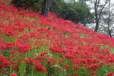 Công viên Shiroyama