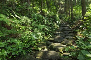 Con đường cổ Kumano