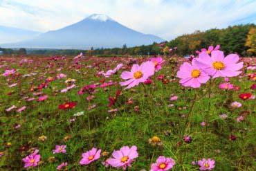 花之都公园(富士山)