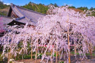 毘沙門堂(京都)