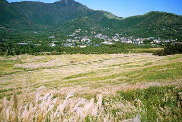Pampas grass of Sengokubara(Hakone)
