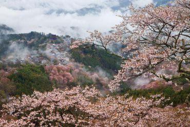 Mt. Yoshino(Nara)