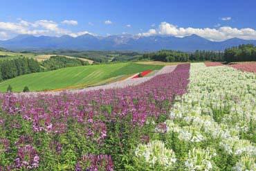 Biei(Furano · Biei · Hẻm núi Sounkyo)