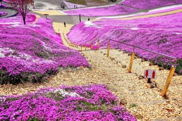 Công viên hoa anh đào Higashimokoto(Địa điểm ngoài Hokkaido )