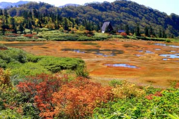Koya Pond, Tengu Garden(Niigata)