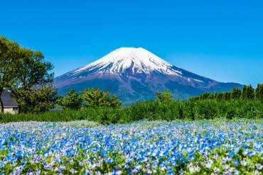 花の都公園(富士山)