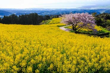 白木峰高原(長崎)