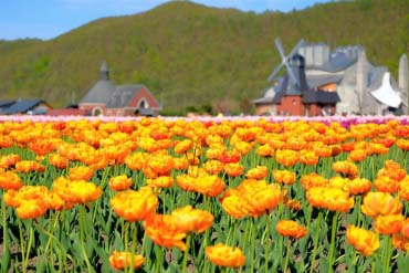 Kamiyubetsu Tulip Park(Other Areas of Hokkaido)
