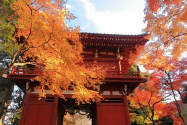 Hondoji Temple(Chiba)