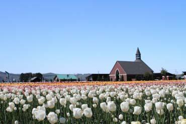 Công Viên Hoa Tulip Kamiyubetsu