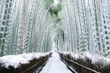 Rừng trúc Sagano(Kyoto)