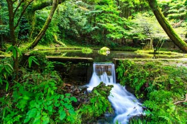 Yamabuki Water Source(Kumamoto)