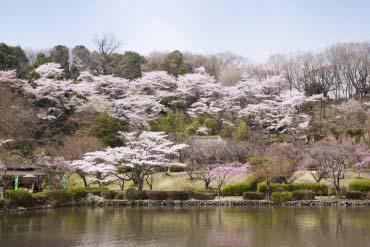 Yakushi-Ike Park