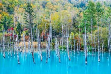 Blue Pond (Aoiike)(Furano, Biei, Sounkyo Gorge)