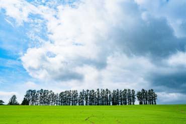 Mild Seven Hills(Furano, Biei, Sounkyo Gorge)