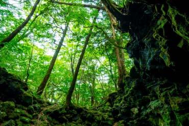 Aokigahara Forest(Mt. Fuji)