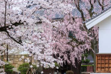 Nijo Castle(Kyoto)