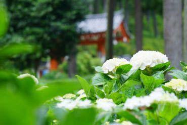 Mimurotoji Temple(Kyoto)