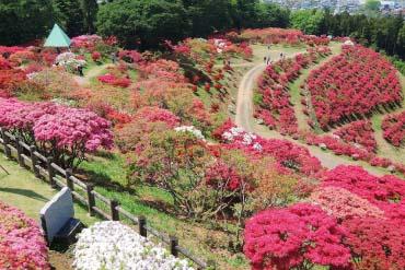 笠間杜鵑公園(茨城)