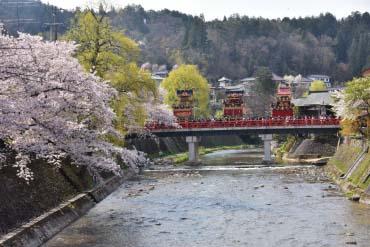 Row of Cherry Trees(Takashima City)(Hidatakayama)
