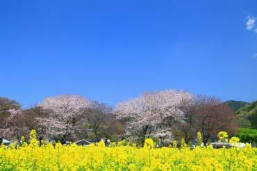 Hadanotokawa Prefectural Park(Kanagawa)