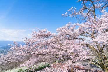 Công viên Minoyama(Saitama)