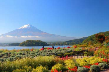 Công viên Kawaguchiko Oishi(Fuji san)