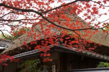 Jikishian Temple(Kyoto)