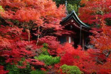 Bishamondo with red leaves of autumn(Kyoto)