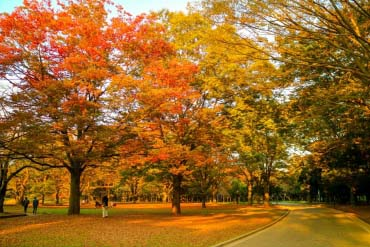 Yoyogi Park(Tokyo)