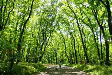 Công viên rừng quốc gia Musashi Hills