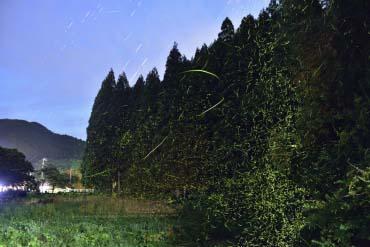 天の川ほたるまつり(滋賀・琵琶湖)