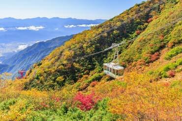 Senjojiki curl(Nagano)