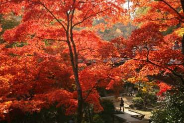 弥彦公园(新泻)