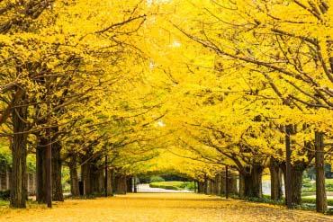 昭和纪念公园