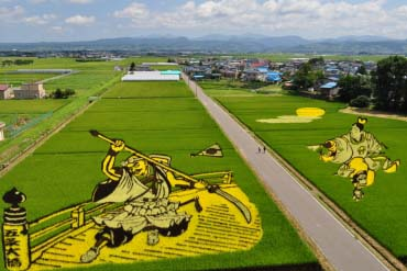 Rice Paddy Art / Seni Padi Sawah