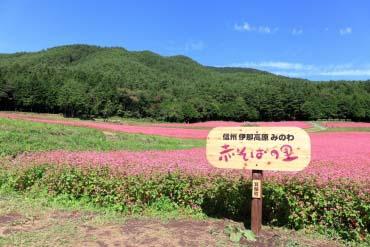 红荞麦故里(长野)