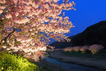 Minami Sakura (Shizuoka)