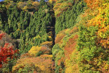 Mt. Takao(Tokyo)