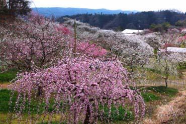 Lembah Plum Tsukigase