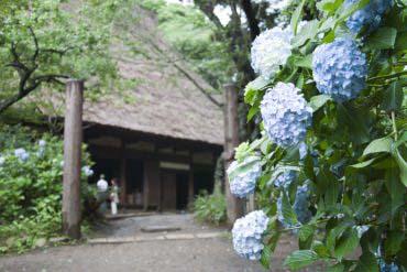 Sankei-en Garden(Yokohama)