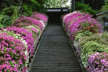 Đền Taikodoji