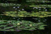 Khu vườn của Monet