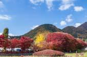 Lễ hội mùa thu Fuji Kawaguchiko