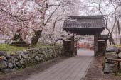 Cherry Blossoms of Takato Castle Site Park