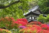 Ngôi đền Togakuji