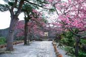 Thành Nakijin