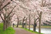 Byodonuma Fureai Park