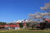 Trang trại Koiwai